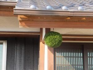 杉玉飾り1